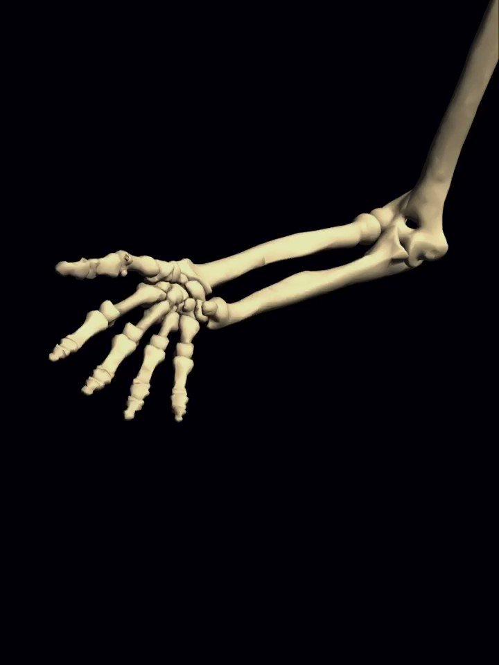 「手首そのものは回転しない」と5億年前から言い続けてますが、文章ではどうも伝わり辛くスルーされてしまいがちなので・・これが現実のバイオメカニクス。まあ「肘から」ですよね。ピッキングに回転をミックスしたい場合はこのメカニクスを頭に入れておくと良いかもね! #ギターレッスン