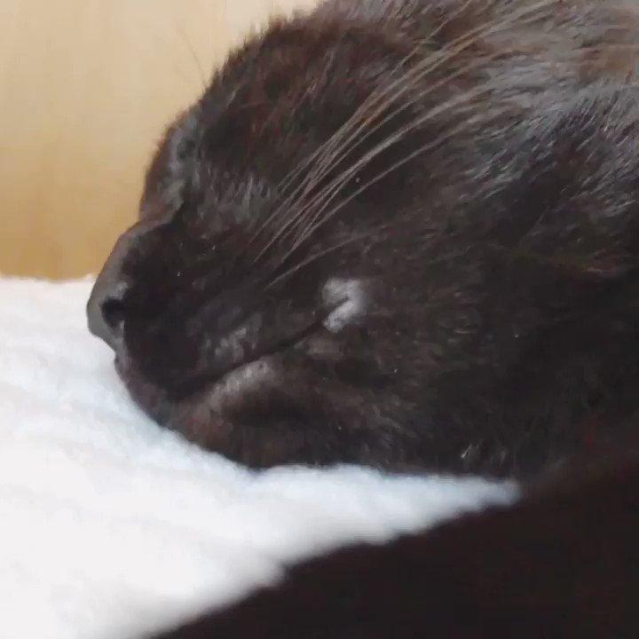 ろんちゃん寝てるときに頭撫でると「ニコ…」とするからとてもかわいい。