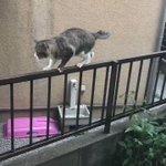 やっとの思いで降りた猫とヒソヒソする3匹の猫