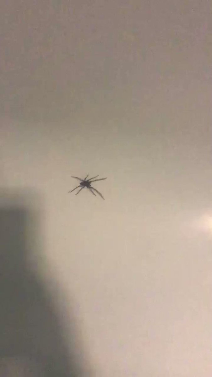 #spider rules with the influx of large besties in the U.K. right now ..