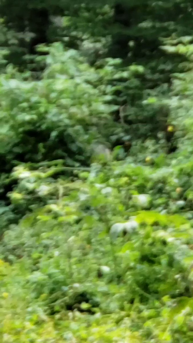 RT @SGOutdoors: Catching them feedin! #hunting #outdoors #hunt #hunter #fishing #nature #deerhunting #deer #photography #camping #dog #bowhunting #wildlife #guns #outdoor #rifle #huntinglife #huntingseason #archery #hiking #whitetail #whatgetsyououtdoors…