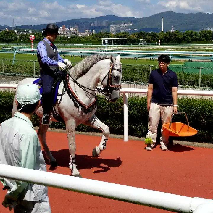 ウイナーズサークルで ちょっとしたホースショーしてた🏇✨ ドゥラメンテもこんな歩き方してたなぁ。  タリスマンくんはおじぎが苦手みたいで 柵にお尻ぶつけちゃってた🤭カワイイ💕  #阪神競馬場  #JRAアニバーサリー
