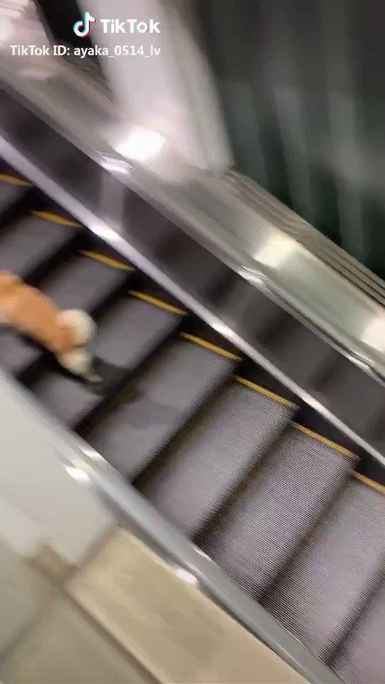 エスカレーターを颯爽と駆け上がるわんこ🐕他の動画もチェック⬇️#TikTok