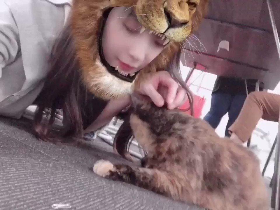 猫にも反応するスタンプで遊んでたら猫がライオンに喰われそうになってた🦁私は喰われてる