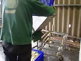 Commonplace, casual shredding of innocent babies! Sentient life as detritus in the food industry. Dont be a part of this - #govegan #antispeciesism