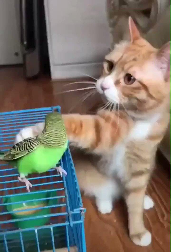猫が撫でてる…