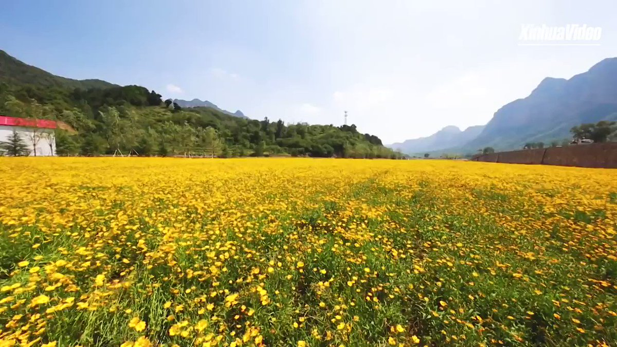 Bloomin'marvelous: Flowers carpet the foot of Taihang Mountain in Hebei, north China