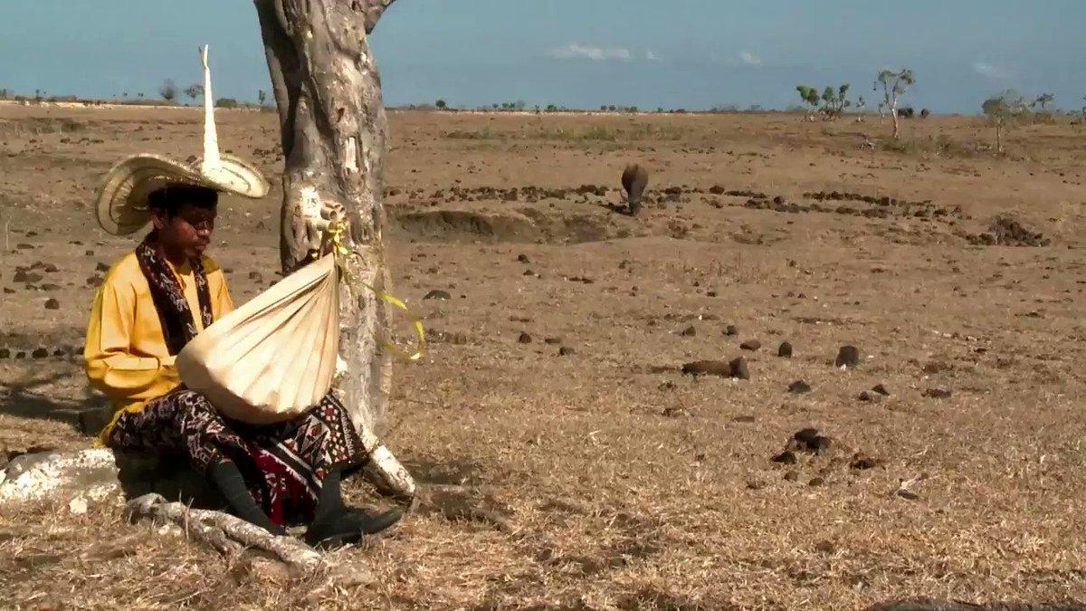 "Trailer #MELIHATINDONESIAMETROTV episode ""Memetik Sasandu di Nusa Lontar"", saksikan selengkapnya hari Rabu (11/9) pukul 22.30 WIB.#filmdokumenter #MemetikSasandudiNusaLontar #Sasandu #musiktradisional #rote"