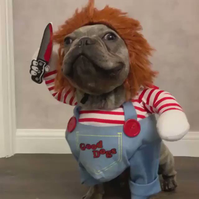Chucky costume for dog? Take my money, please. #horror #horrorfans