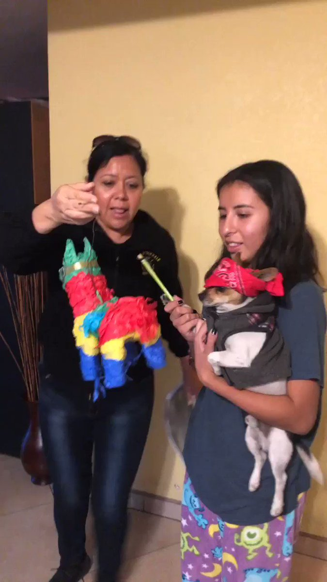 19 Mexican Moms Who Didn't Want A Dog And Came Around Quickly