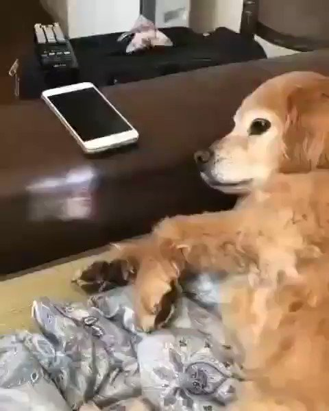 No screen time for you today ... 🐶📲 ... its weekend time !! 😅 ( finedoggos )