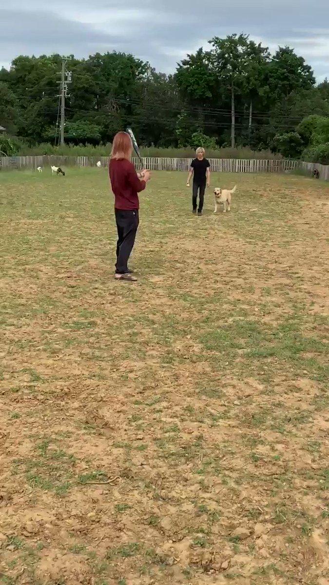 今日はデニ君達と野球したよ!クタクタになるまでやった!(人間含め…後半はグダグダでしたwあ!ボールはゴムボール!あんまりかたくないやつ!だからそんなに距離飛ばないやつです(* • ω • )b