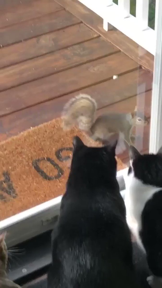 @sneakdoorbeta @catpineapple Cats are even happier squirrels exist. #TheLoveThatDareNotPurrItsName 😻🐿