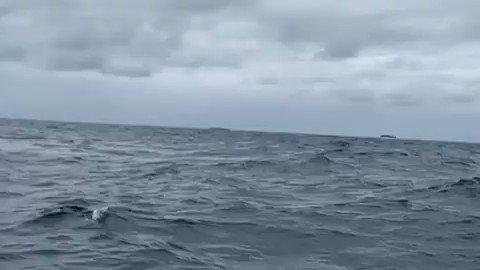 Todays Ocean Beauty: Humback Whale 📽️ IG cassie.jensen.photography #ocean #nature #SundayThoughts