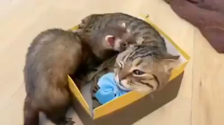 Hey! This is MY box.