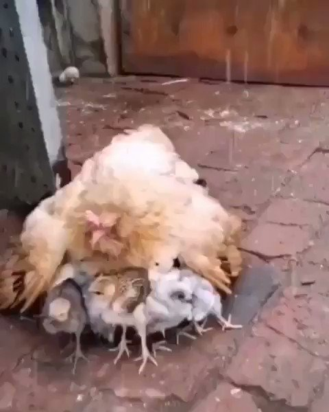 Mother love 😊