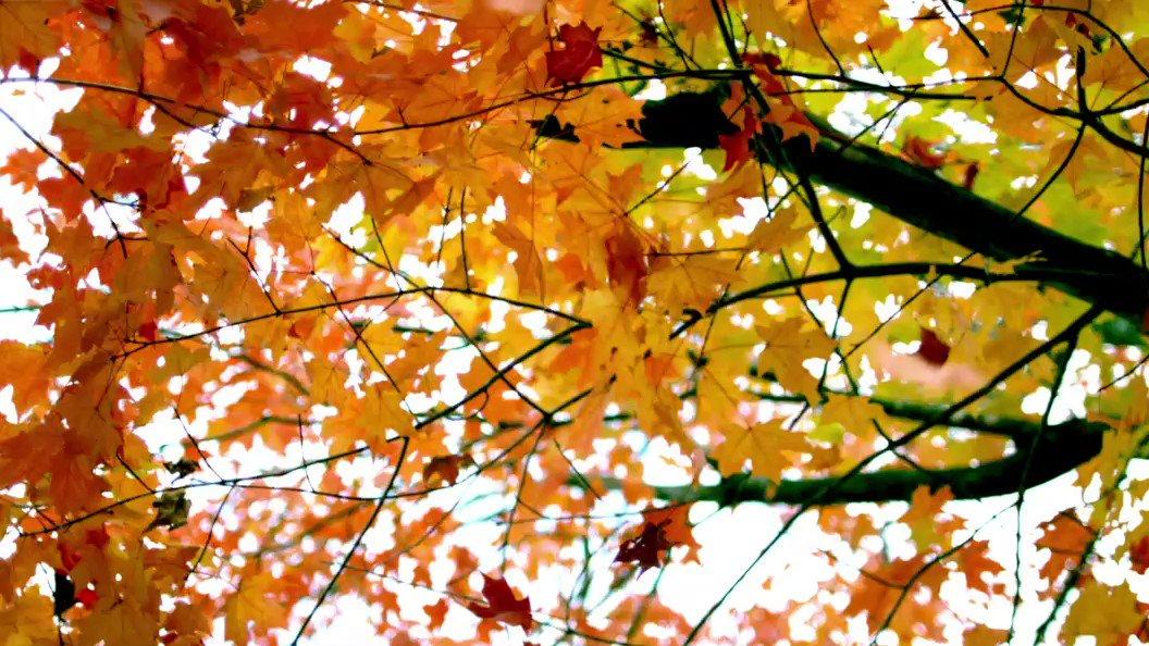 Картинки анимации осенние листья, картинки