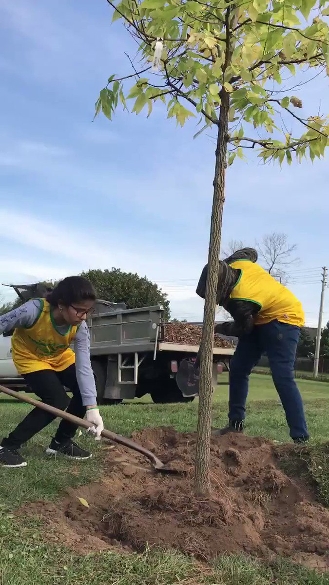 Little green thumbs at work!   Grade 5 & 6 students from Howard Robertson Public School are planting trees today in partnership with the city to celebrate #NationalTreeDay  #lovemyhood pic.twitter.com/FFEcCpS17U – at Kinzie Park