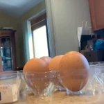 あなたはきっと騙される!卵をよーく、よーく見ていて…