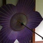 日本の美!光によって色が変化する桔梗の傘がすばらしすぎる