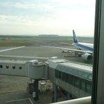 ここではよく見る光景?新千歳空港で人間と鹿の追いかけっこが始める!