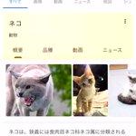 Googleで猫と検索するとAR猫が表示できま表示できる!?