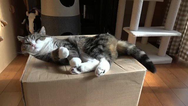 「猫食いボックス」に吸い込まれる猫