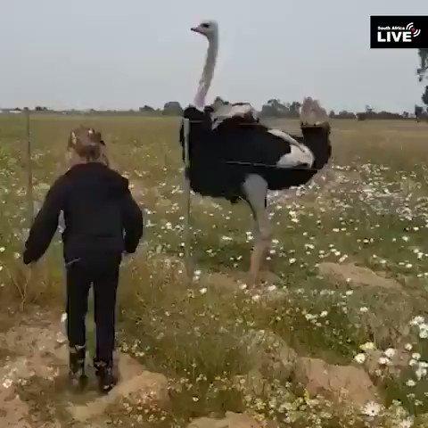 伝説の鳥使い