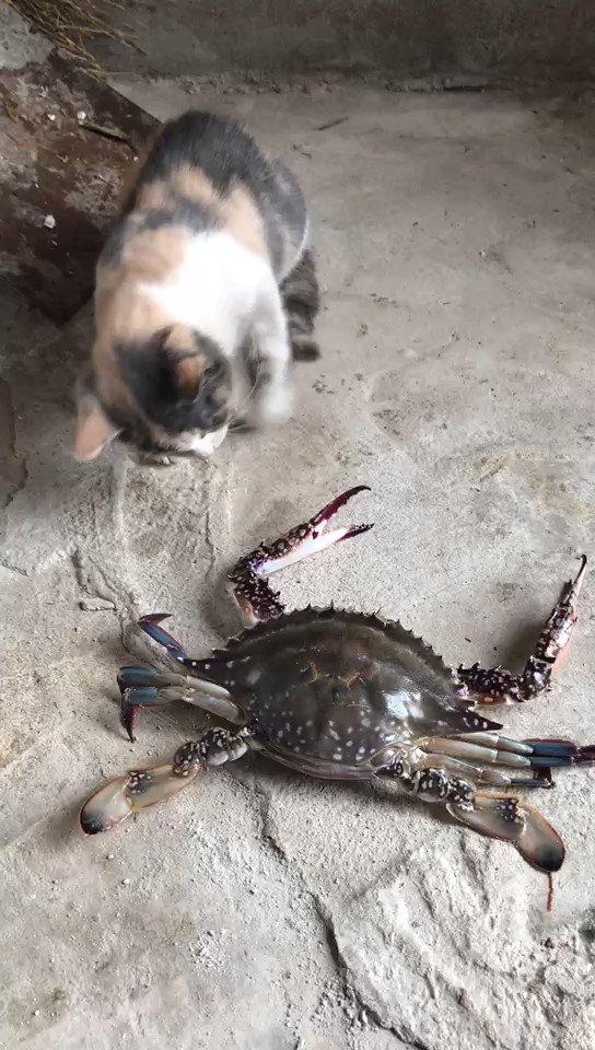 カニと遊んでいた猫…