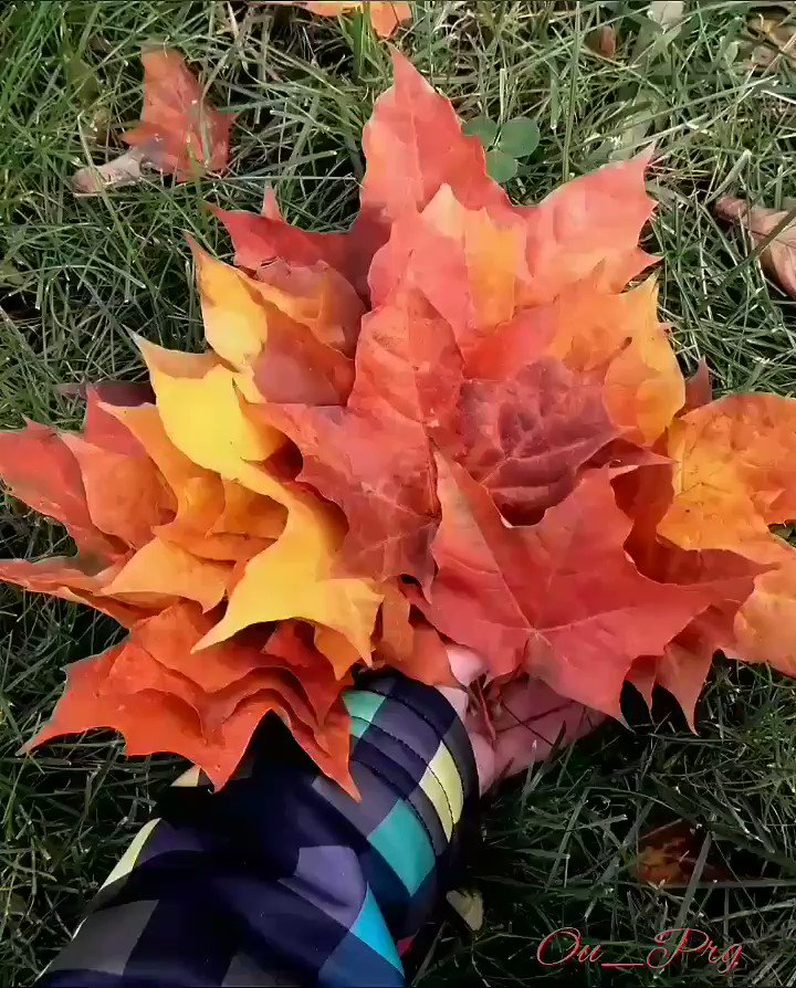 I am sending many autumn greetings and big ....from Prague. 🍁🍂🍃 Great Friday. Weekend is comming. #FridayFeeling #FridayThoughts #Autumn #leaves #weekendvibes I took on the way to work today.
