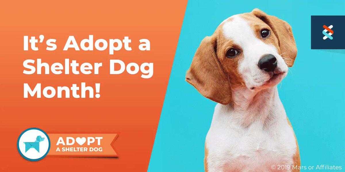 Image for the Tweet beginning: This #AdoptAShelterDogMonth, we're donating $1/kit