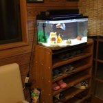 これはちょっと怖いかも!病院の待合室でじっと見つめてくる金魚に思わず戦慄!