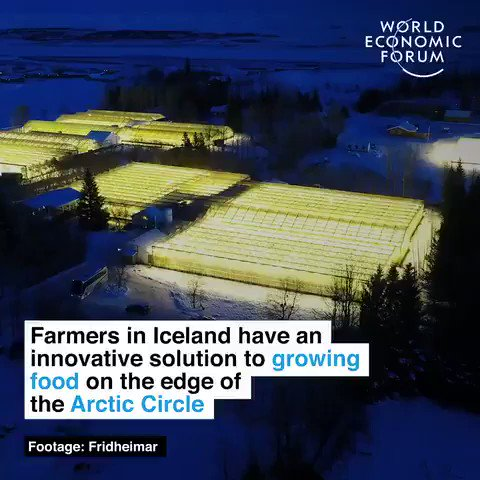 Farmers in #Iceland, on the edge of the Arctic Circle, are using geothermal energy to grow food all year round. We have the solutions, lets implement them. #ActOnClimate #climate #energy #tech #climatestrike #go100re #GreenNewDeal @GretaThunberg
