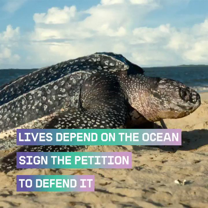 Lets unite to save our oceans! Together we can ensure that a third of our oceans become off limits to destructive ocean practices, like overfishing. A strong oceans treaty will benefit humans, animals and sea creatures alike 🦑 🐙 🐋 >> act.gp/2nzr3rU #ProtectTheOceans