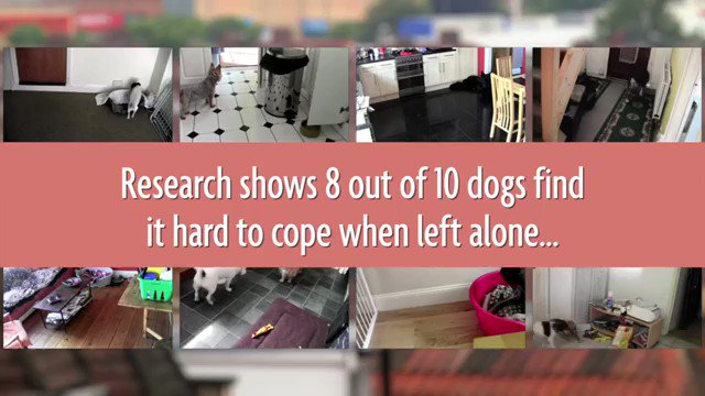 🐕🐶💕Separation anxiety can be displayed in many ways, but as it usually only occurs when the owner is out and stops when they return, it often goes unnoticed. Be #DogKind this #WorldMentalHealthDay and learn to spot the obvious and hidden signs: bit.ly/30UYXVF