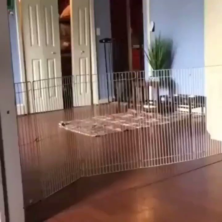 RT @TheOwenMyers: The dogs keep jumping the fence, a solution has been found🐶😁 https://t.co/uERAWa3F37