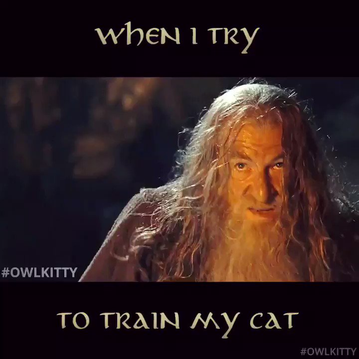 You shall not pass! 🧙♂️🐈 #lordoftherings #owlkitty