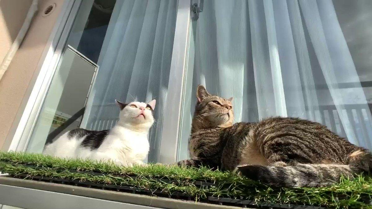 ベランダに出てからしきりに外の匂いを嗅ぐ猫たち台風が通ったことわかってるのかな...