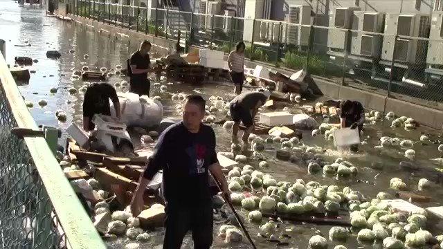 大量レタスが水浸し 青果市場 浸水で営業できず さいたま#nhk_news #nhk_video