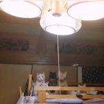 家の中にカメムシがはいってきたら猫たちの様子がかわいすぎた!