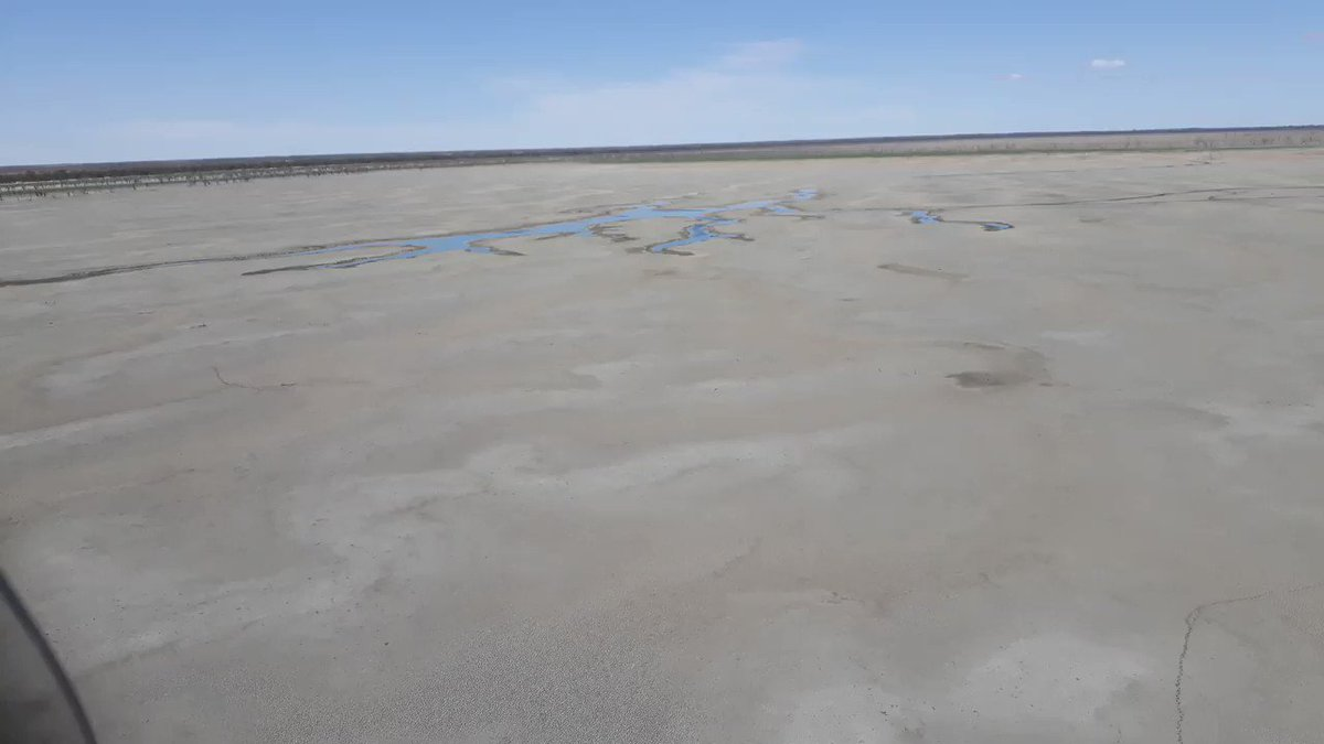 Another big fish kill reported in the Menindee Lakes system, this one in Lake Pamamaroo. This aerial vid appears to show thousands of dead fish on the banks of this shrinking lake @abcnews #drought #menindeelakes #fishkill