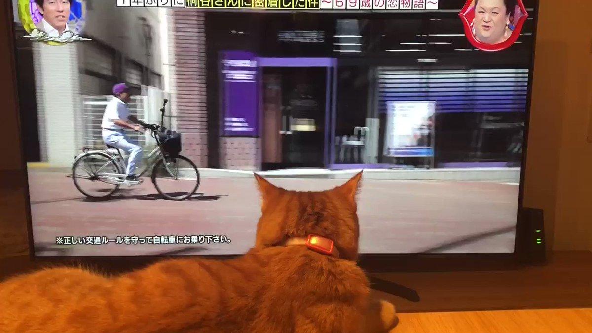 #月曜から夜ふかし猫も #桐谷さん に釘付け