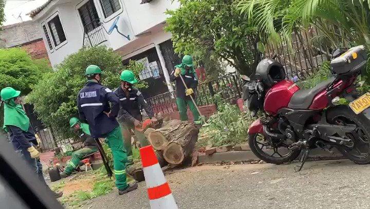 #ReporteCiudadano habitantes del barrio El Refugio #CaliCo denuncian tala de arboles en diferentes puntos del sector. ¿Qué dice @DagmaOficial?