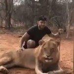 ライオンが人を驚かせた結果?スゴいしてやったり顔してる!