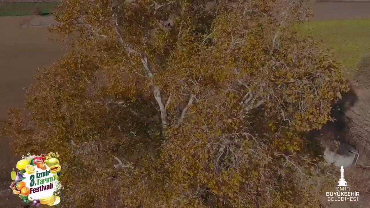 Image for the Tweet beginning: Bu topraklarda başka bir tarım