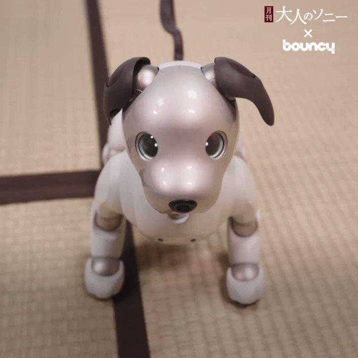 離れていてもそばにいる。小さな瞳が家族をつなぐ「aibo」★読者の皆さまの声をお聞かせください★👉 Sponsored by Sony#Sony #bouncy #大人のソニー  #aibo