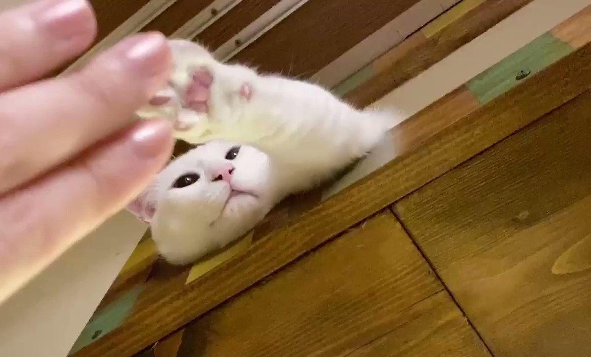ポン!ポン!ポンポン!!#握手会