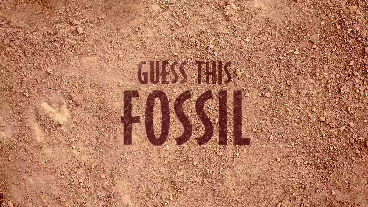 Happy Fossil Day! Can you name the dinosaur who's fossil this belongs to?