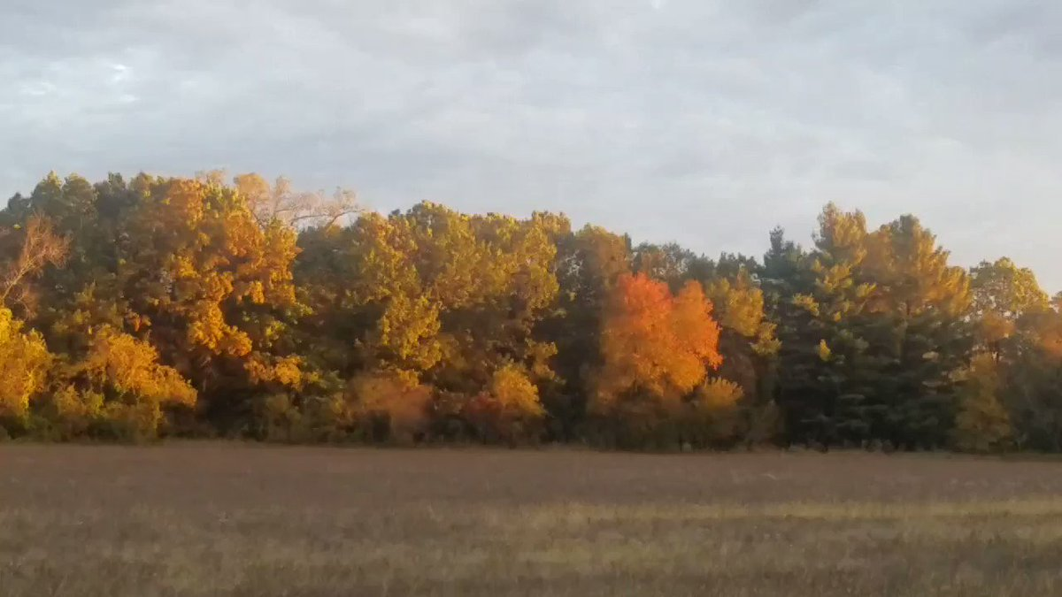 This is how my morning started. Happy weekend! #fallcolors #Peaceful #lifeisgood
