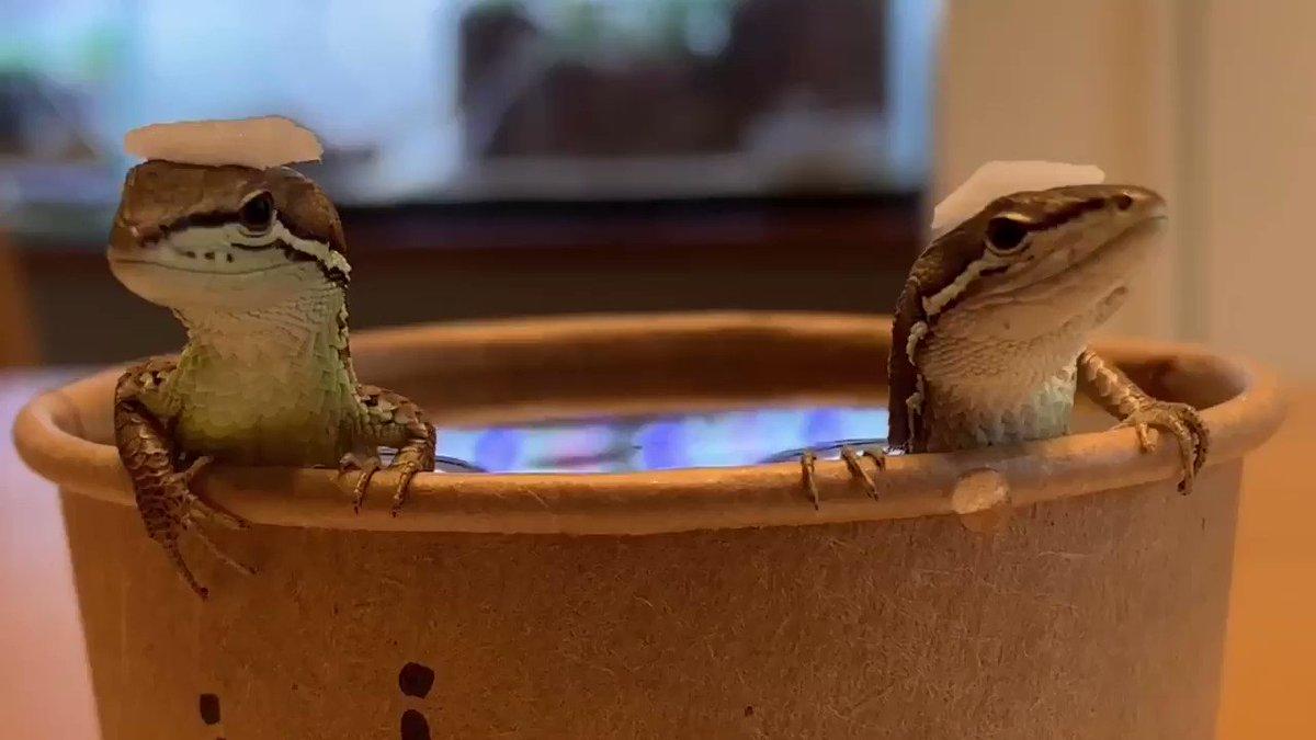 今までのツイートで発覚した事日本人はやはりお風呂が好きという事で間違いないですか?
